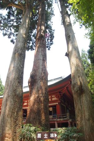 比叡山釈迦堂