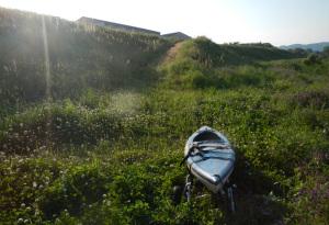 紀の川カヌー漕ぎ漕ぎ