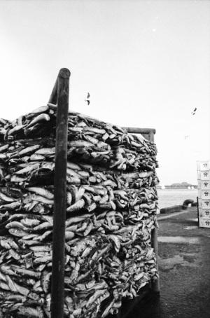 1980年2月尾鷲漁港