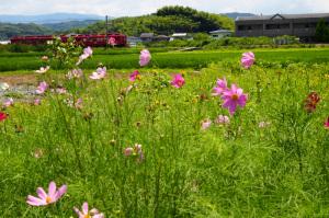 和歌山電鉄