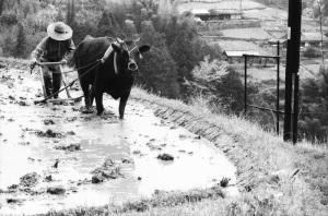 十津川村1973年