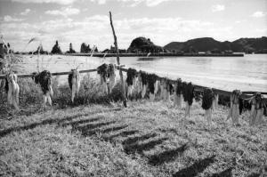 1973年9月橋杭海岸
