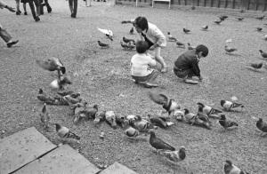 1973年京都