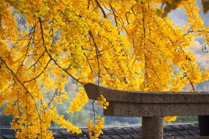 紀の川市賀茂神社