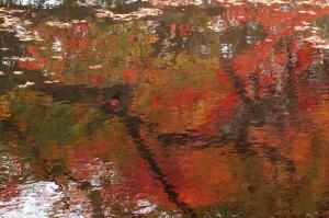 池に写る紅葉 根来寺