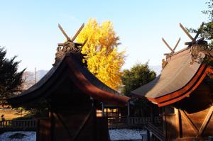 丹生酒殿神社の大銀杏