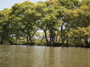 琵琶湖カヌー