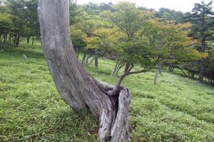 大台ヶ原登山