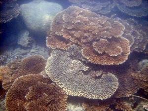串本の海 サンゴ