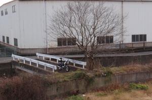 紀ノ川初釣り