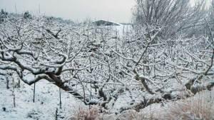 紀の川市雪