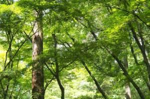 奈良春日山原生林