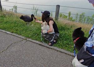 紀の川市平池黒鳥