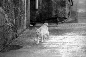 街角の猫たち
