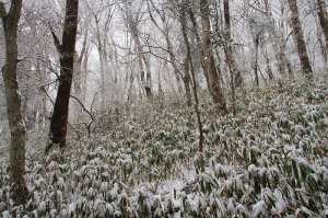 金剛山雪景色