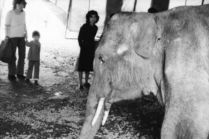 移動動物園1976年