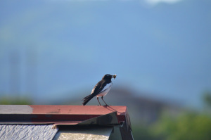 平池の鳥たち