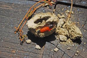 ドバチの巣