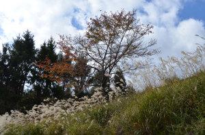 高野山 磨尼山