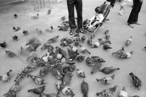 1978年10月天王寺動物園