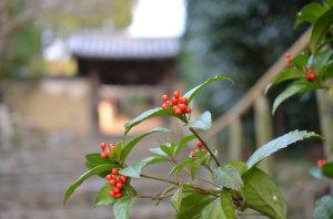 奈良百毫寺