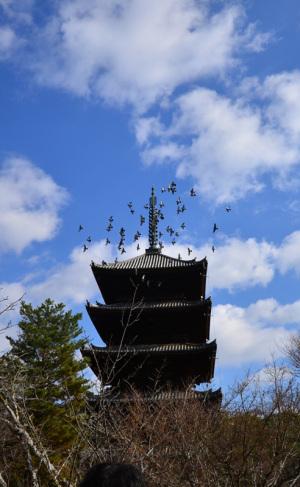 仁和寺五重の塔