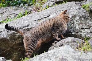 和歌山城の猫たち
