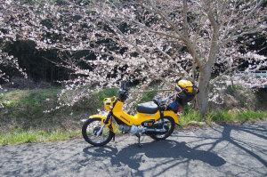 花の春の始まり